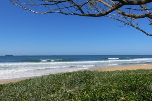 Sunny Coast Peelers