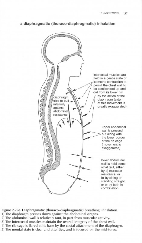 "A Diaphragmatic Inhalation from ""Anatomy of Hatha Yoga"" by H. David Coulter"